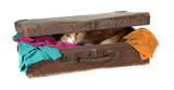 closed suitcase with clothes and cute tomcat poster