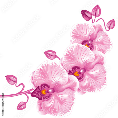 Fototapeten,blume,orchidee,orchidea,orientalisch