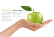 Green ripe apple in a hand  Vector