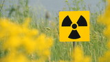 Field of a yellow grass.Radioactivity Sign.
