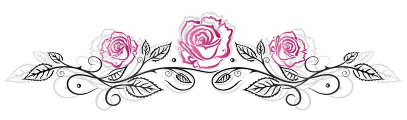 Rosen, Ranke, flora, Blumen, Blüten, schwarz, pink