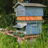 ruche,miel,campagne,nature,fleurs,pollen