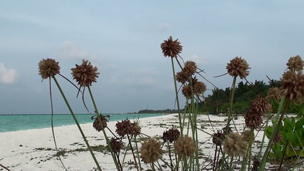 wild beach with white coral sand and thorns