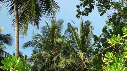tropic rainforest