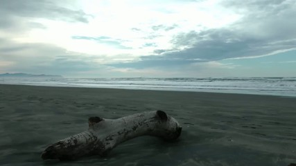 Driftwood on the Washington Coast
