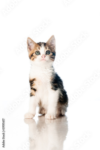 Kitten isolated on white backdrop