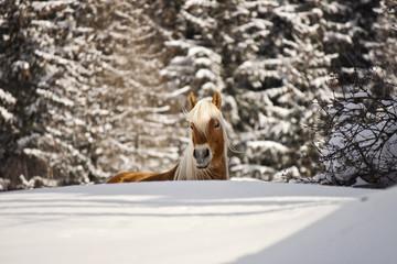 cavallo in paesaggio da fiaba