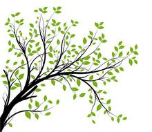 Wektor zestaw - zielony gałęzi i liści dekoracyjne