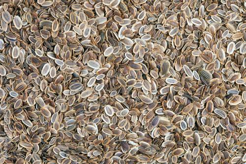 Fennel seeds (Anethum graveolens).