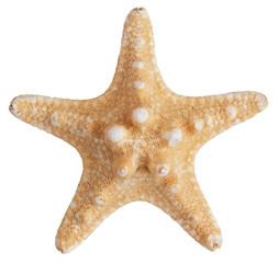 Fossilized sea star