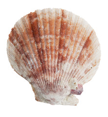 Petrified half the ocean seashells