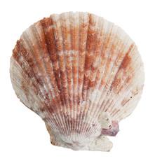 Petrified half the ocean seashells
