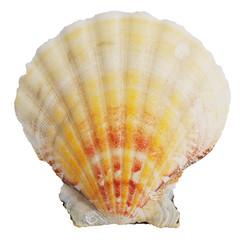 Petrified door ocean seashells