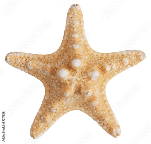 Fossilized sea star