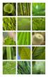 Jardin, jardinage, printemps, vert, plante, végétation
