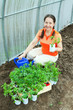 woman with tomato seedlings