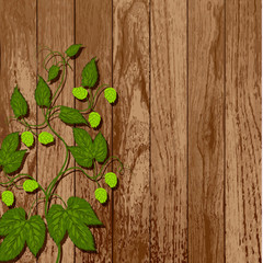 Hop vine on a wooden wall.