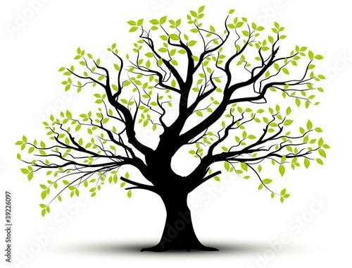 wektor-zestaw-dekoracyjne-drzewa-i-zielonych-lisci