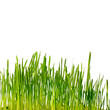 grass isolated