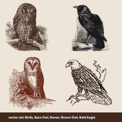 Vektor-Set: Vögel, Schleiereule, Rabe, Waldkauz, Weißkopfseeadle