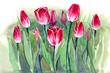 tulips (sereis C)