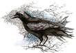 crow (series C)