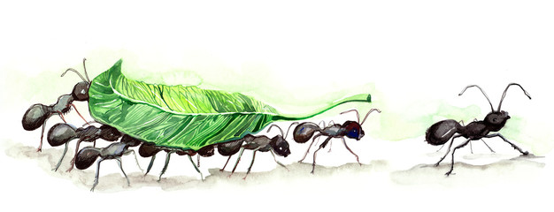 ants team (series C)