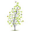 young spring tree with flowers - vector silhouette