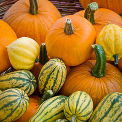Organic squash and pumpkins in basket