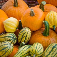 Organic squash and pumpkins in basket