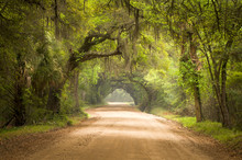 "Постер, картина, фотообои ""Charleston SC Dirt Road Forest Spanish Moss South Edisto"""