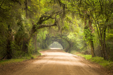 Charleston SC Dirt Road Forest Spanish Moss South Edisto © Dave Allen