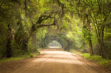 Charleston SC Dirt Road lasu hiszpański Moss Południowej Edisto