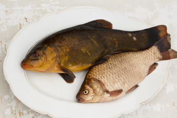 Tench and crucian