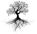 Fototapety vecteur série, arbre avec racines vectoriel noir