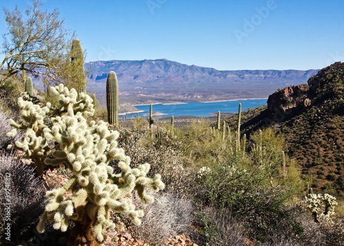 Cacti and Lake Roosevelt