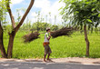 Indonesian farmer carrying dry branches