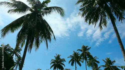 Coconut palm and blue sky.