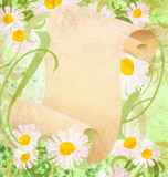 daisy flowers, green grass and old paper scroll illustration