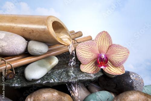 Fototapeten,kurort,thalasso,spring flower,bambus