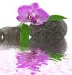 décor zen relaxation, orchidée, galets, bambou