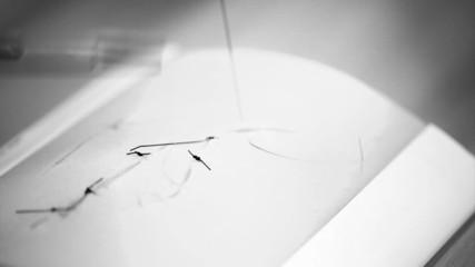 student practice suturing