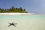 Fototapety Seastar in blue lagoon