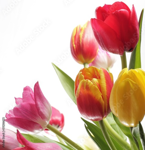 Foto op Canvas Lilac Frühlingsblumen