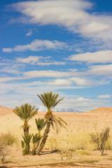 palms in the Sahara desert