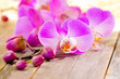 Fototapeten,cymbidium,lila,rosa,wellness