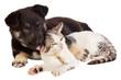 Quadro puppy and cat