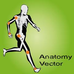 Vector conceptual human anatomy