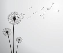 Dandelion wektor