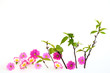新緑と花びら A